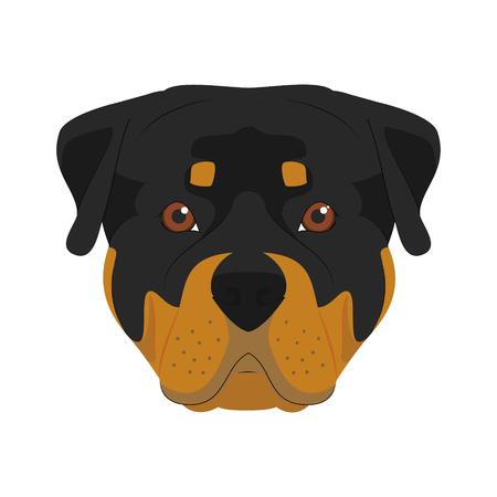 canine: Rottweiler dog isolated on white background vector illustration