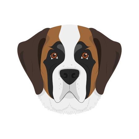 saint bernard: Saint Bernard dog isolated on white background vector illustration