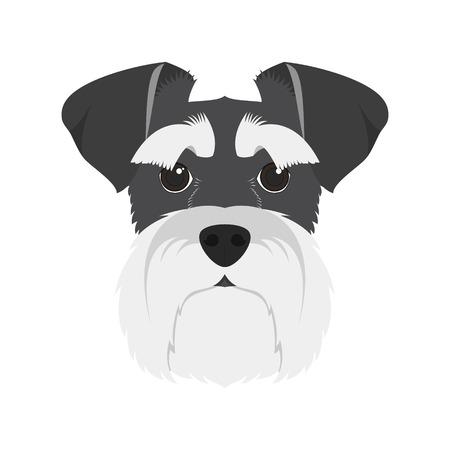 schnauzer: Schnauzer dog isolated on white background vector illustration