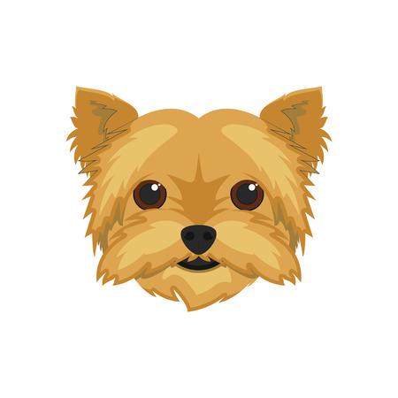 yorkshire: Yorkshire Terrier dog isolated on white background vector illustration