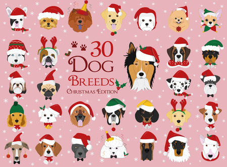 Set of 30 dog breeds with Christmas and winter themes Stock Illustratie