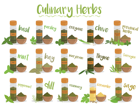culinary: Set of 15 different culinary herbs in cartoon style.
