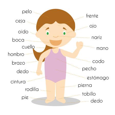 Woordenschat in het lichaam van het menselijk lichaam in het Spaans Vectorillustratie