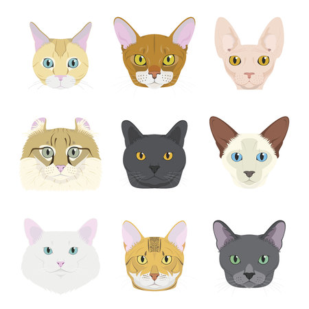 Cat breeds Vector Collection: Set of 9 different cat breeds in cartoon style. Illustration