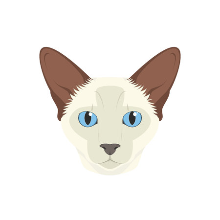 Balinese cat isolated on white background vector illustration