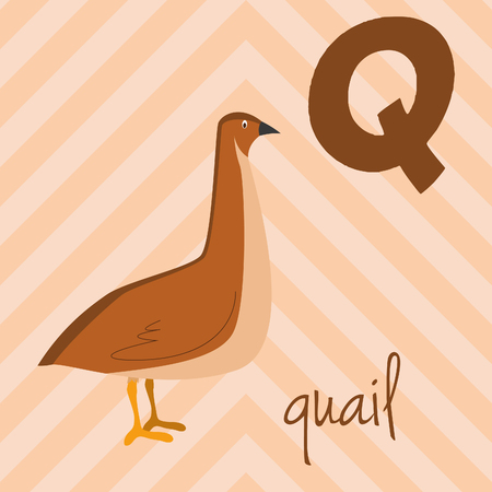 Cute cartoon zoo illustrated alphabet with funny animals: Q for Quail. English alphabet. Learn to read. Isolated Vector illustration. Ilustração