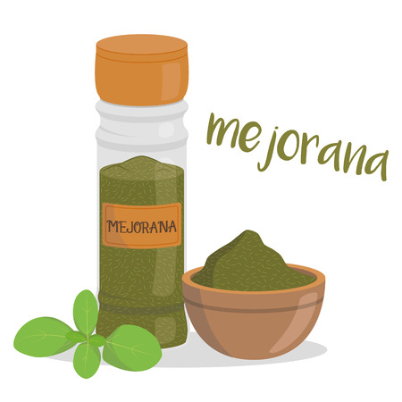 Vector marjoram illustration isolated in cartoon style. Spanish name. Herbs and Species Series