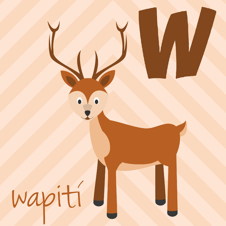 Cute cartoon zoo illustrated alphabet with funny animals. Spanish alphabet: W for Wapiti. Learn to read. Isolated Vector illustration.