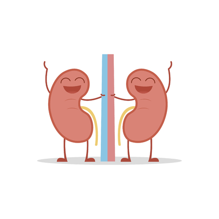 Vector illustration of a healthy and funny kidneys in cartoon style.