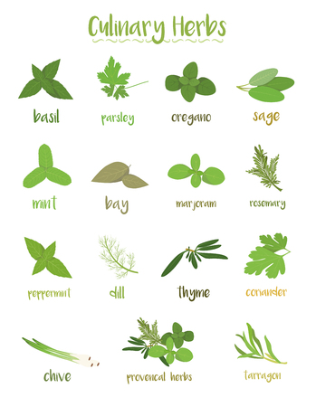 Set of 15 different culinary herbs in cartoon style.