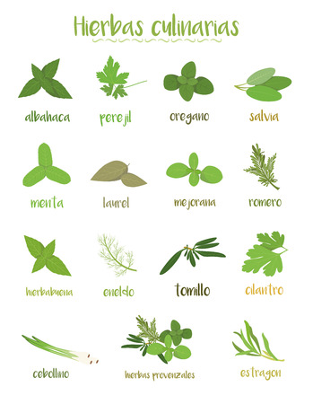 Set of 15 different culinary herbs in cartoon style. Spanish names.