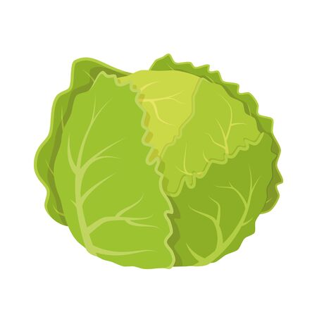 Vector illustration of a funny lettuce in cartoon style.