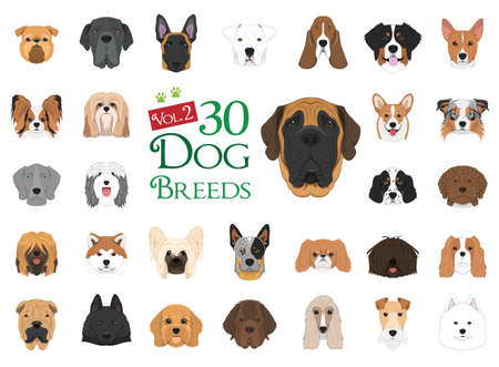 Dog breeds Vector Collection: Set 2. 30 different dog breeds in cartoon style. Иллюстрация