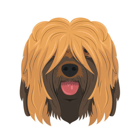 Briard or Brie Shepherd dog isolated on white background vector illustration