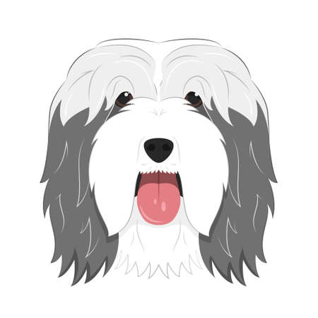 Bearded Collie dog isolated on white background vector illustration