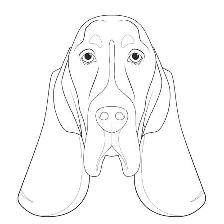 Basset Hound dog easy coloring cartoon vector illustration. Isolated on white background