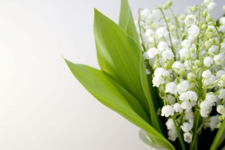 mayflower: Lily of the valley Stock Photo
