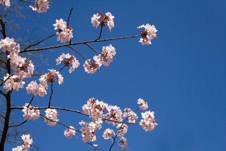 cherrytree: Cherry-tree