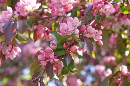cherrytree: Cherry-tree in the park