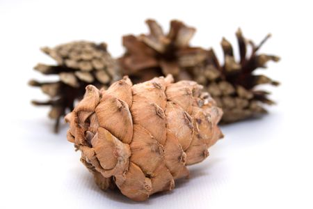 Fir cones photo