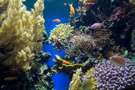 actinia: Submarina