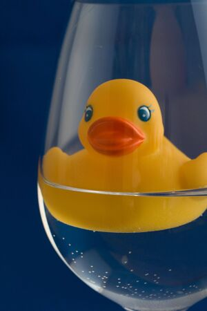 Yellow duck photo