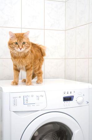 bobtail: Kurilian bobtail on washing machine