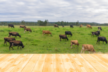 new products: Wood table top with blurred background of Cattle, cows graze and sheeps a New Zealand farm. can be used for montage or display your products Stock Photo