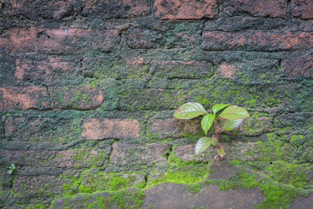 little tree and moss green ferns old brick wall. Stock Photo