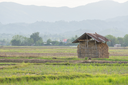 granary: Barn for harvesting in rural Thailand. Stock Photo