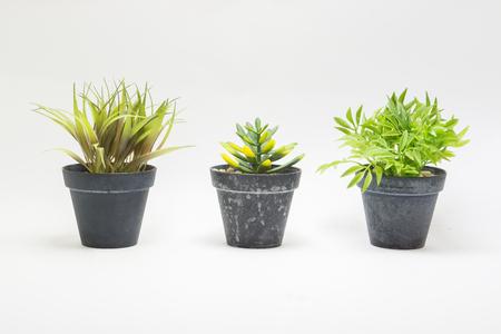 Beautiful flowers and ornamental plants in flowerpots on white