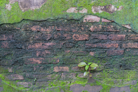 little tree and moss green ferns old brick wall. Reklamní fotografie
