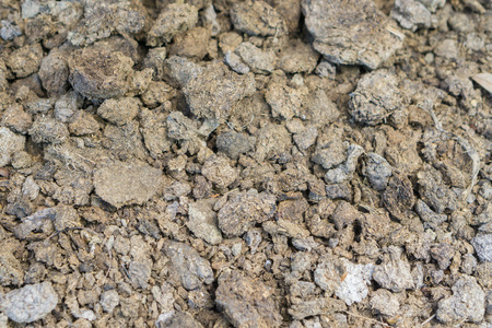 poo: fresh horse manure on grass,Dried horse poo texture,elephant poo