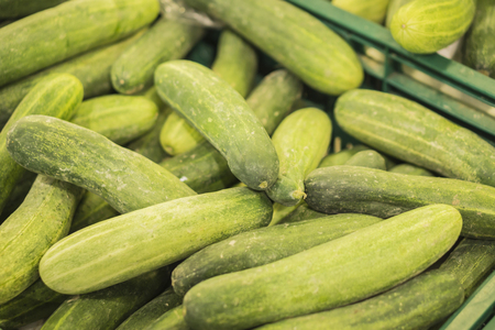 bunched: cucumber in the market,Big bunch of cucumbers at farmers market,Fresh organic cucumbers from late autumn harvest,Cucumbers bunched together For Sale At Market ,good as a background,selective focus