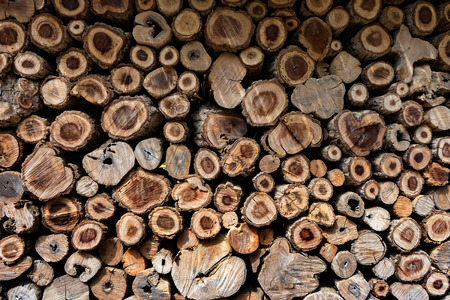 Cross Sectional Wooden Background,Different sections of the tree.Pile of chopped fire wood prepared for winterCutting wood is arrange to be the natural wall at farm in Thailand,selective focus