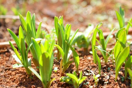 rowth: Green leaves in the garden in spring time.