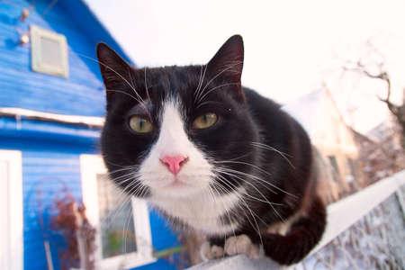 Gato se sienta y mira fijamente a la cámara Foto de archivo