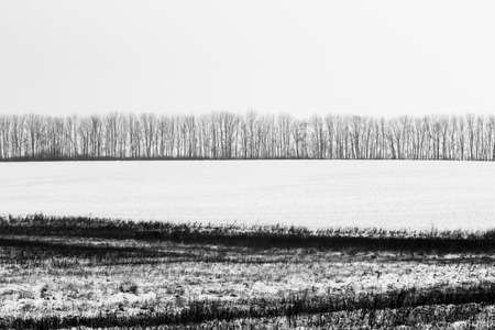 Winter Landscape Tree Forest Covered by Snow in bw