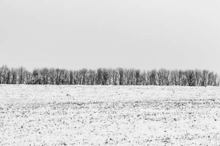 Winter Landscape Tree Forest Covered by Snow in bw photo