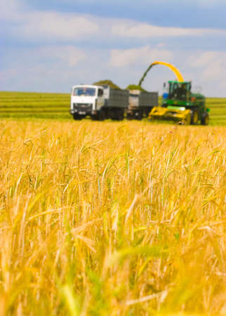 A modern combine harvester working a wheat field photo