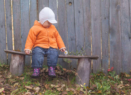 little boy sitting on a bench in autumn with chamomile photo