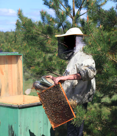 Beekeepers checking a beehive Stock Photo
