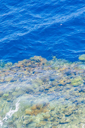 great barrier reef marine park: red sea coral reef with hard corals through clean water.