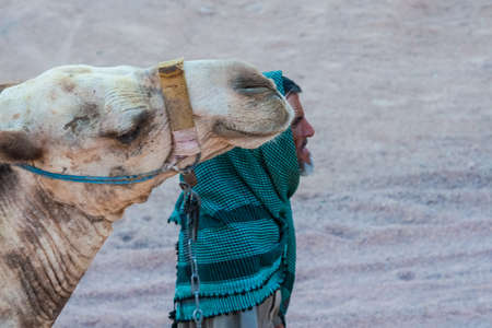 SHARM EL SHEIKH, EGYPT - JULY 9, 2009. Bedouin is a camel in the desert. Editorial