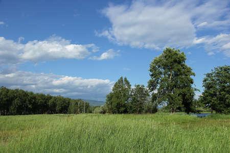 herbe ciel: paysage d'�t� avec le ciel bleu, l'herbe et les arbres