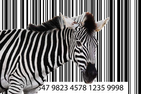 zebra in the background as a barcode photo