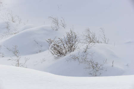 snowdrifts: winter landscape with deep white snowdrifts and bushes