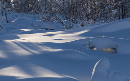 snowdrifts: snowdrifts in winter forest illuminated by the sun Stock Photo