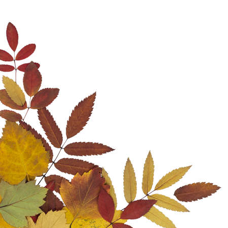 wizen: postcard with brightly colored autumn leaves with a white background isolated