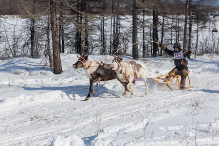 Iengra, Neryungri District, Yakutia, Russia. March 3, 2018 Racing reindeer on the celebration of the reindeer herders Editorial